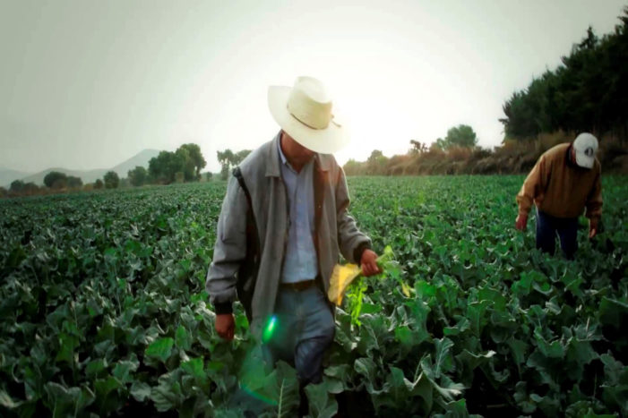 Propuesta de una Política de la Economía Social y Solidaria para el Desarrollo con Equidad y Paz en México